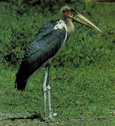 Птицы джунглей и саванн
