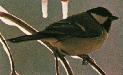 Фотография расположено в архивах: девушка птица фото.