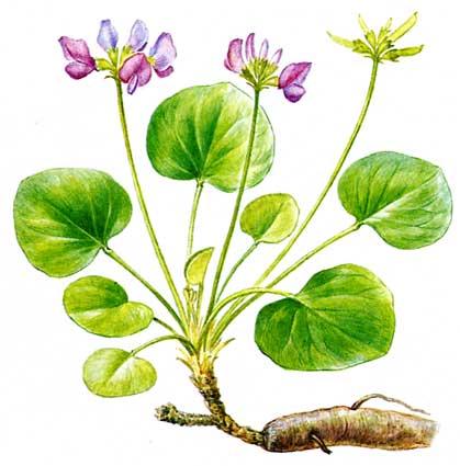 Редкие растения из красной книги