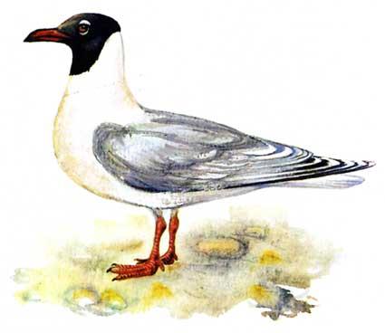 Это фото расположено в каталоге: хищные птицы ростовской области фото.