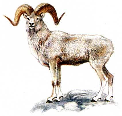 Посмотрите фото и познакомьтесь с другими животными.  Свинья.  Овца.
