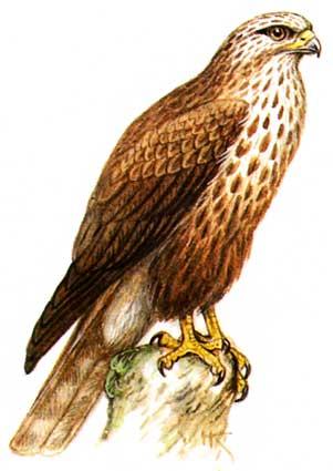 Птиц ванна шпарки птица и птицы дома