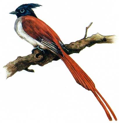 Рисунки птиц с красной книги