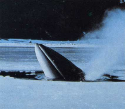 фото кит сейвал