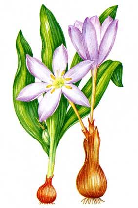 Исчезающие виды растений красная