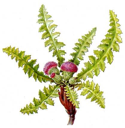 Книга растения красная книга растения