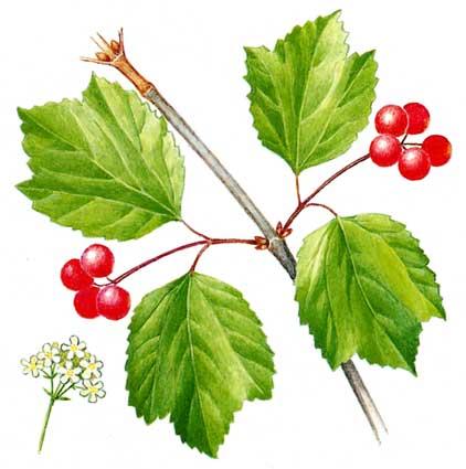 Редкие растений из красной книга