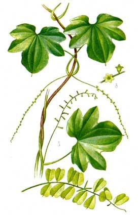 Цветы из ленточек схемы растения из
