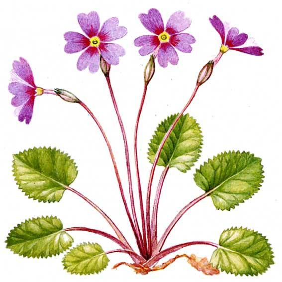 поверхностная обработка почвы: комнатные растения красно зеленые листья.